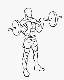 Demonstration of the Barbell Curl exercise